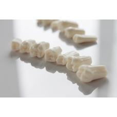 Запасные зубы к фантомной челюсти, 28 шт.